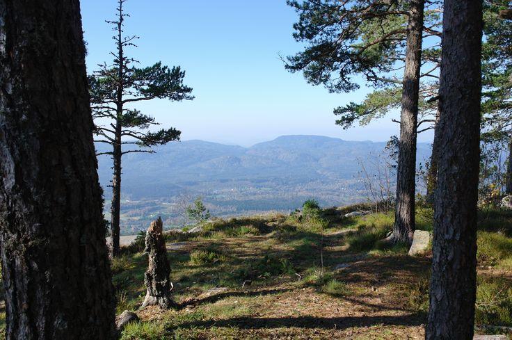 Lille Skrehelle. #nature #telemark #norway #pinetree #summer