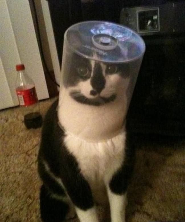 The Astronaut Cat  18 Hilarious Trapped Cats Who Need Human Help Right Now • Page 3 of 5 • BoredBug