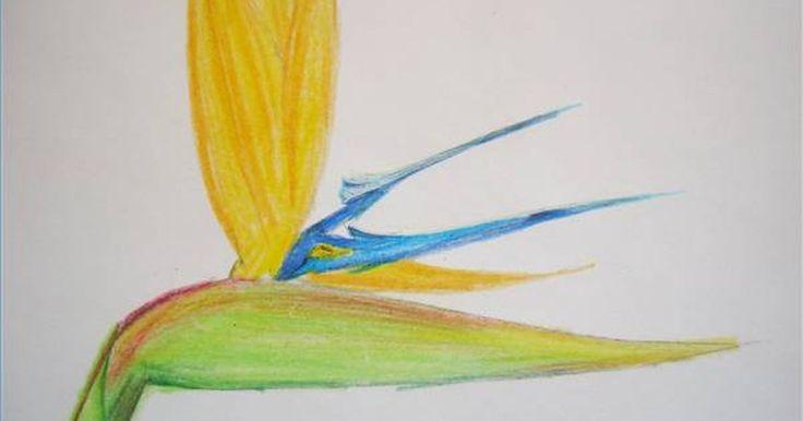 Passo a passo de como desenhar flores havaianas. Se você está olhando para capturar algumas formas coloridas e bonitas, então as flores havaianas são ótimas opções. As várias flores vibrantes das Ilhas Havaianas são uma grande fonte de inspiração para artistas do mundo todo. A seguir você encontrará os passos para a elaboração do Hibisco Amarelo, da exótica flor Pássaro do Paraíso e da Pluméria ...