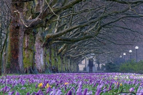 Tumblr: Travel Photo, Amazing Natural, Carpets, Families Trees, Travel Destinations, Entrance, Flower, Photography, Fields