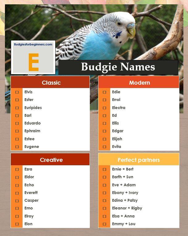 Excellent E Bird Names Budgie Names Budgies Pet Names