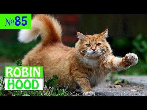 ПРИКОЛЫ 2017 с животными. Смешные Коты, Собаки, Попугаи // Funny Dogs Cats Compilation. Апрель №85 -  #animals #animal #pet #cat #cats #cute #pets #animales #tagsforlikes #catlover #funnycats  Learn how to speak cat! Click HERE for the cat bible! ПРИКОЛЫ 2017 с животными. Смешные Коты, Собаки, Попугаи // Funny Dogs Cats Compilation. Апрель №85  Хаски, которая не х�