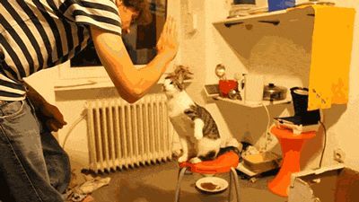 Pin for Later: 50 of the Cutest Animal GIFs and Pictures EVER This cat that's totally winning Source: Reddit user Florabanta via Imgur