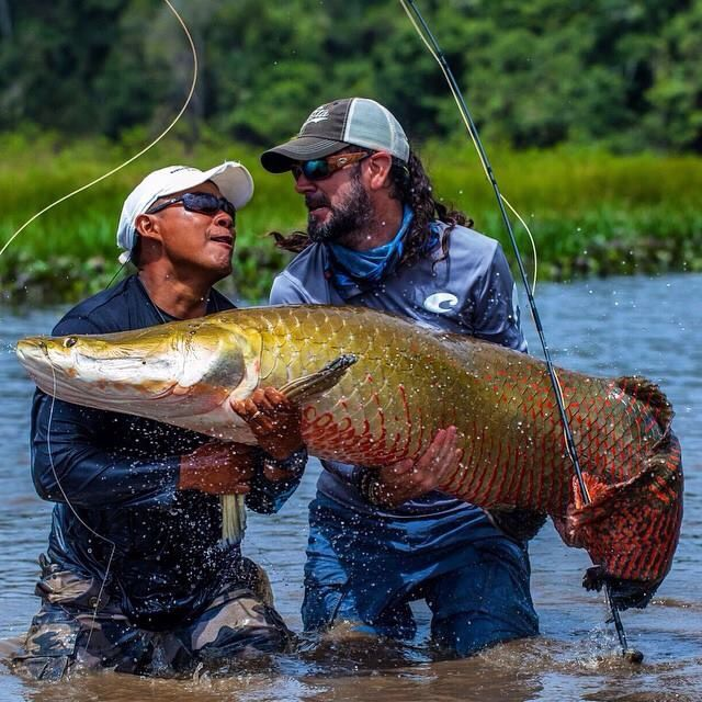 14 best images about arapaima on pinterest the fly for Lake bryan fishing