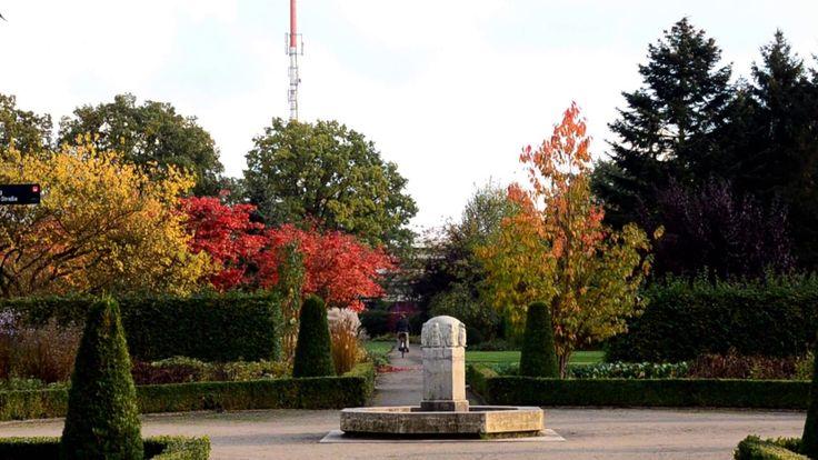 2016-10-23 Mid-October Walk through Altonaer Volkspark (11:00min) | #KokopelliBeeFree #KBFPhotography #KBFWalk #AltonaerVolkspark #Landschaftsschutzgebiet #LandscapeConservationArea