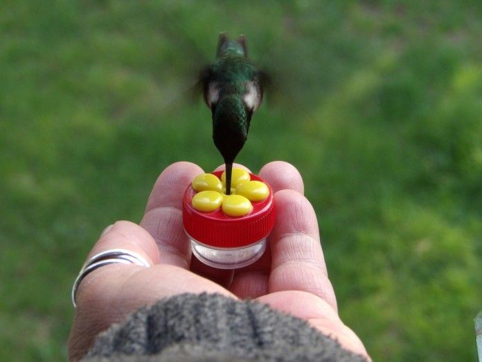 84943e61036444ee9475c1d0567a0b65 - How To Get A Hummingbird To Land On Your Finger