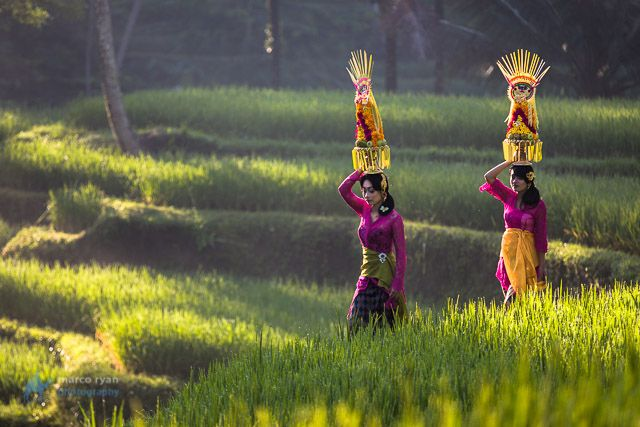 Two Traditionally dressed Bali girls at Dawn wandering through Rice fields by Marco Ryan