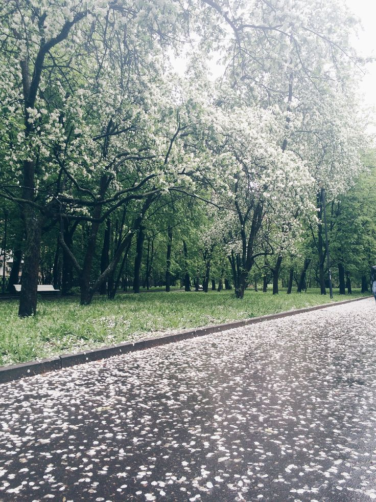 May blooming in Moscow