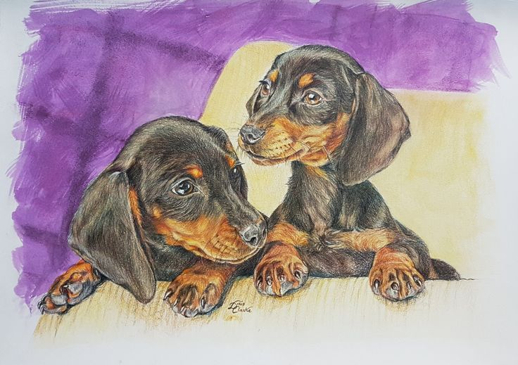 Dachshund puppies - Drawn by Doris Clarke using coloured pencils and watercolour for background.