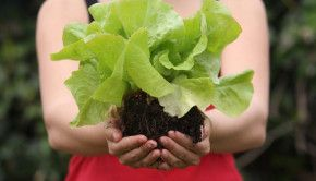 Top 15 Food Plants That Grow in the Shade - Good list! Greens and root veggies. The greens I grow in sunny places (darn near everywhere here) consistently need shade cloth or row cover, so this makes sense to me.