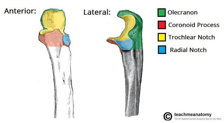 Anatomy of Ulna Bone