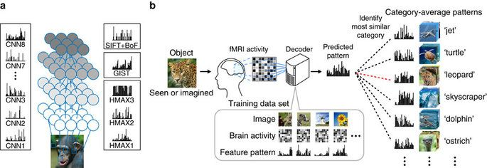 Using fMRI signals and Deep Neural Network AI Kyoto University researchers decode and predict what a subject is seeing or imagining based on brain scan patterns only demonstrating a homology between human and machine vision and its utility for brain-based information retrieval.