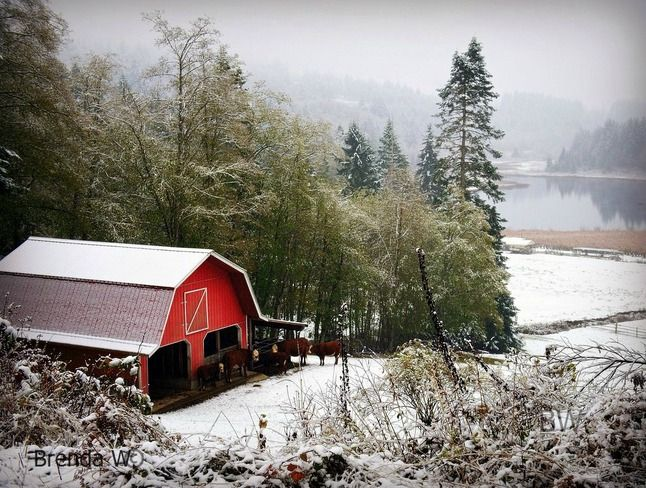 A light dusting // by Brenda Widdess, Port Alberni, BC