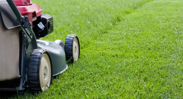 Lawn Mower Safety Tips Summer Lawn Care Lawn Care Lawn Care Tips