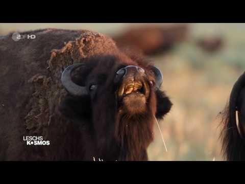 Leschs Kosmos - Duftstoffe: Kampf um die flüchtigen Schätze der Natur [HD]