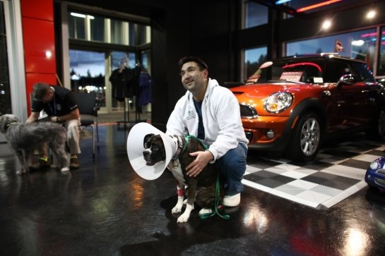 Animals evacuated after a fire at an Emergency Vet Clinic find refuge at Seattle Mini Cooper dealership