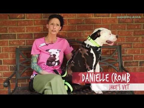 Rescue Dog Jake Becomes A Firefighter - YouTube