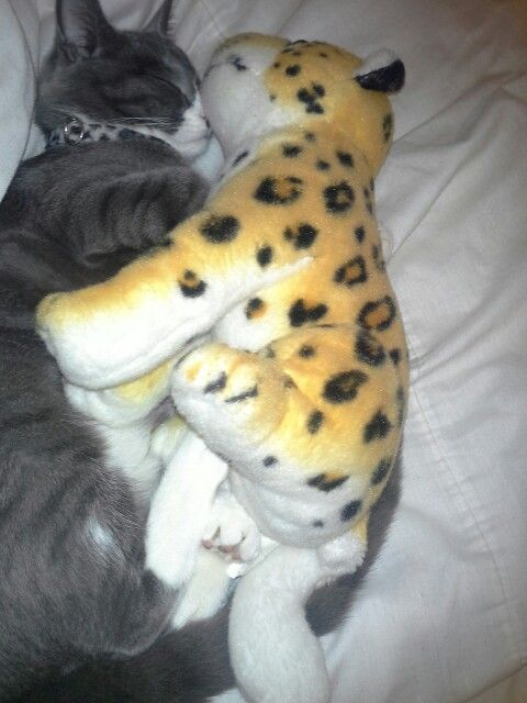 Misters first cuddle with his teddy