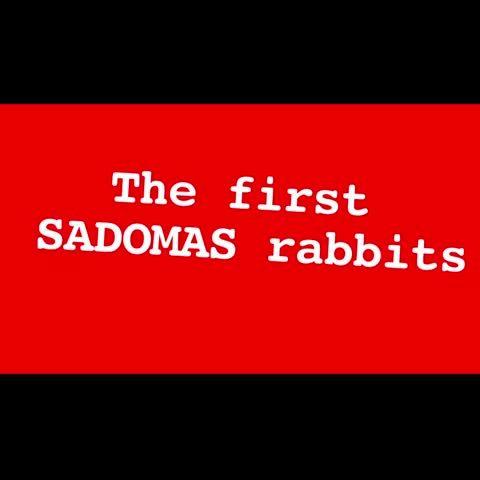 #London #Sadomas #boldasbrass #kwesjackdaw #bus #Kafka