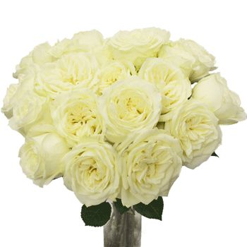FiftyFlowers.com - Polo White Wholesale Roses