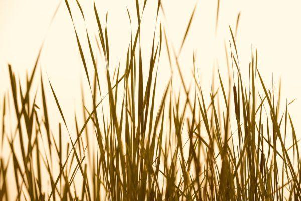 Grass Abstract Sepia