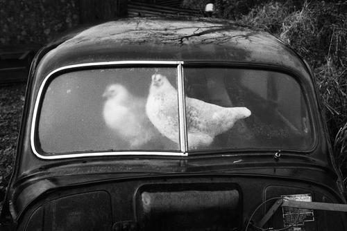 Martin Parr - Ireland, County Sligo. Glencar. Abandoned Morris Minors. From 'A Fair Day'. 1980-1983
