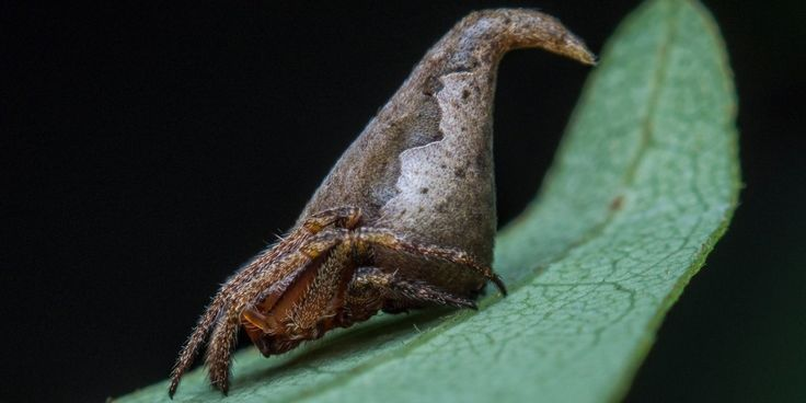 A new spider species in India has been given a name that's sure to be a winner with Harry Potter fans.