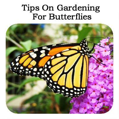 Tips On Gardening For Butterflies