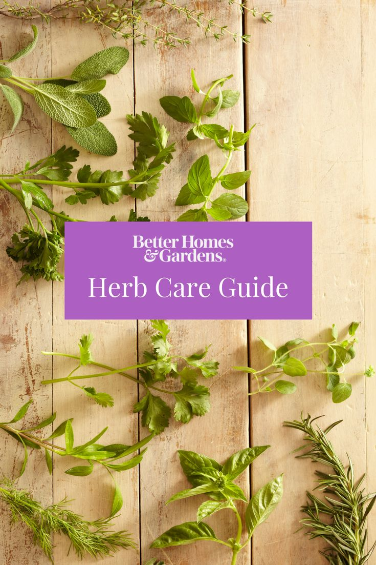Plant your favorite herbs with our handy guide. Whether you're looking to plant thyme, oregano, chives, or mint, here's the basic herb care you should know before you get planting. #herbs #gardening #growingherbs #herbgarden