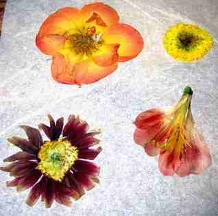 How to dry/ flatten flowers