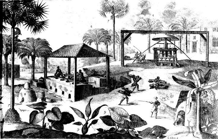 vinaigrerie selon Du Terte 1667