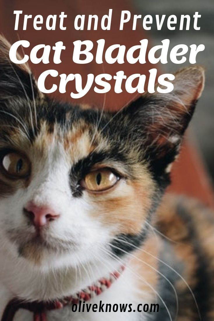 How to Treat and Prevent Cat Bladder Crystals Cats, Cat