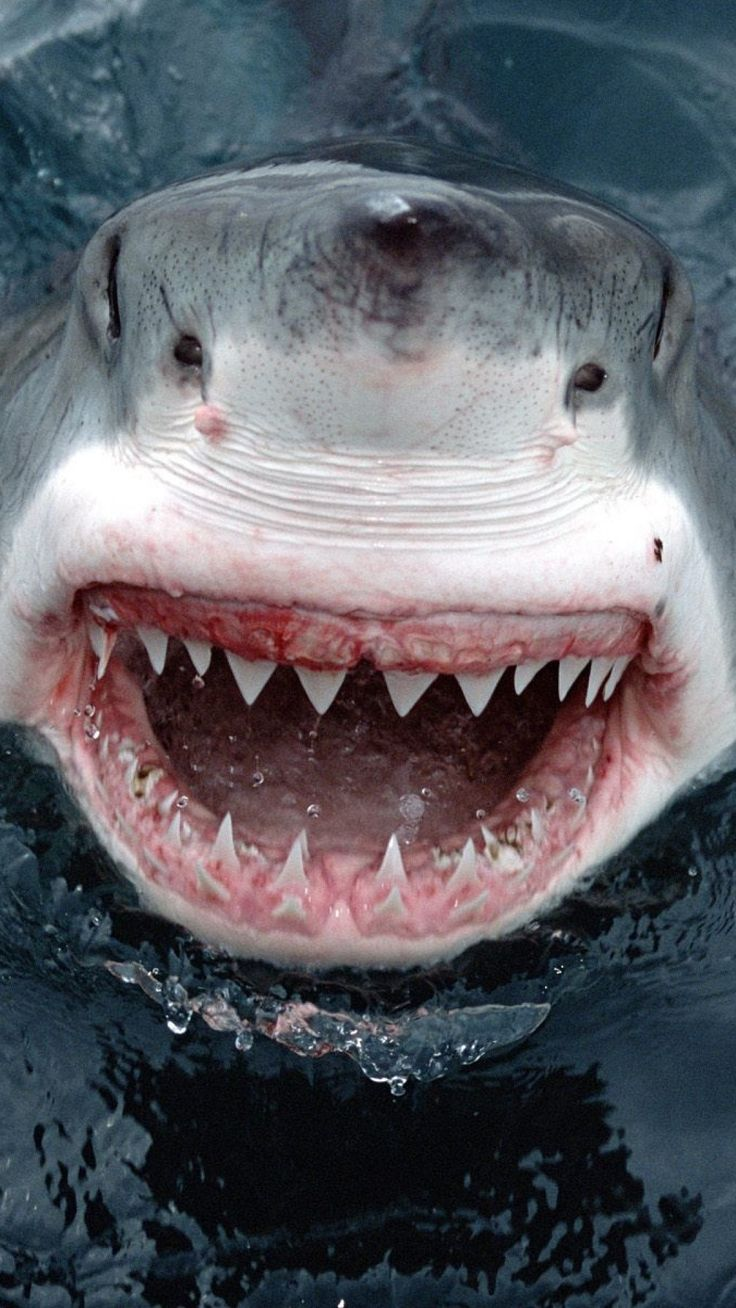 1080x1920 Wallpaper shark, teeth, face, anger