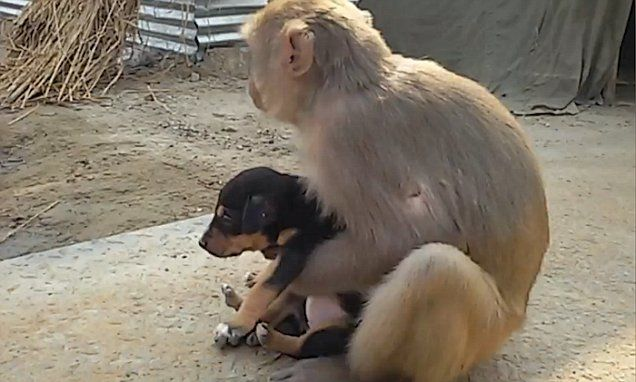 Monkey adopts a stray dog after finding it abandoned
