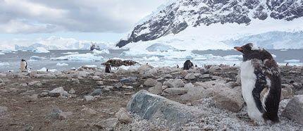 Visit Neko harbour - Antarctica Travel Guide