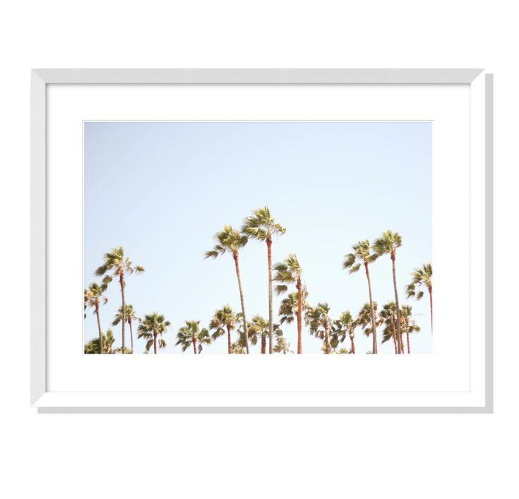 Palms No. 1