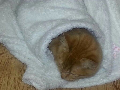 In a blanket