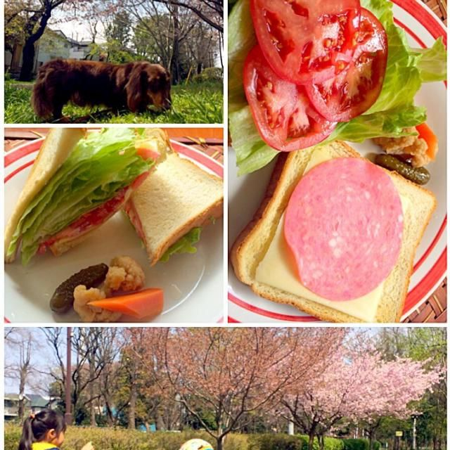 良いお天気なのでお外で遊ぼうと先に急いで食べちゃった外で桜の下でゆっくり食べれば良かったな 夕飯下拵え、おやつかデザートにケーキ作ってお洗濯待ってる間にシャボン玉遊び日差しが暑くて気持ちいい - 41件のもぐもぐ - HCLT Sandwichハムチーズレタストマトサンド by Ami