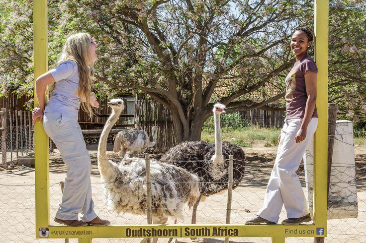 Fun on #tour at #Safari #ostrich #Farm!
