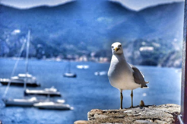 A seagull invited to lunch. #italianbeauty #uniquelandscapes