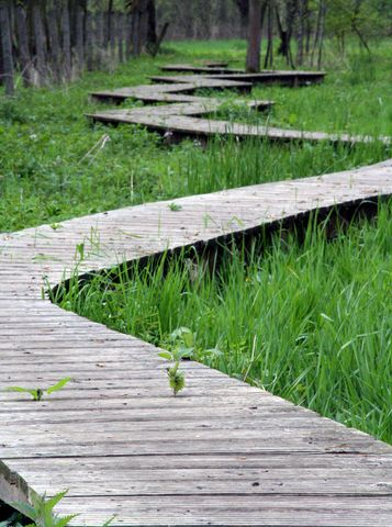 Raised Wooden Path 357×480 Pixels