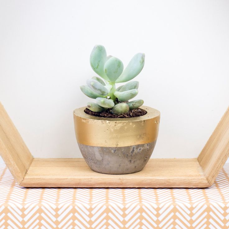 Mini Colour Block Concrete Plant Pot. by Bellsandwhistlesmake on Etsy https://www.etsy.com/uk/listing/385659330/mini-colour-block-concrete-plant-pot