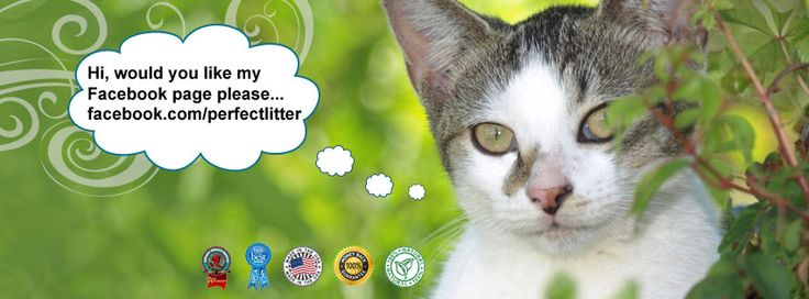 Best Cat Food For Cats With Urinary Crystals