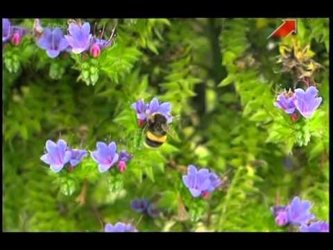Огород без хлопот - Выращивание цветов, привлечение полезных насекомых ( 6 серия ) - YouTube