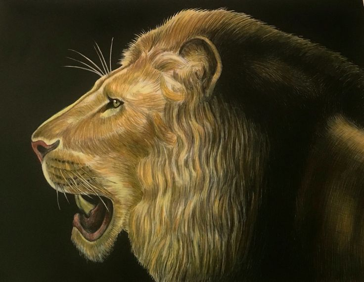 Lion By Julia Mary Hill Coloring BookLion