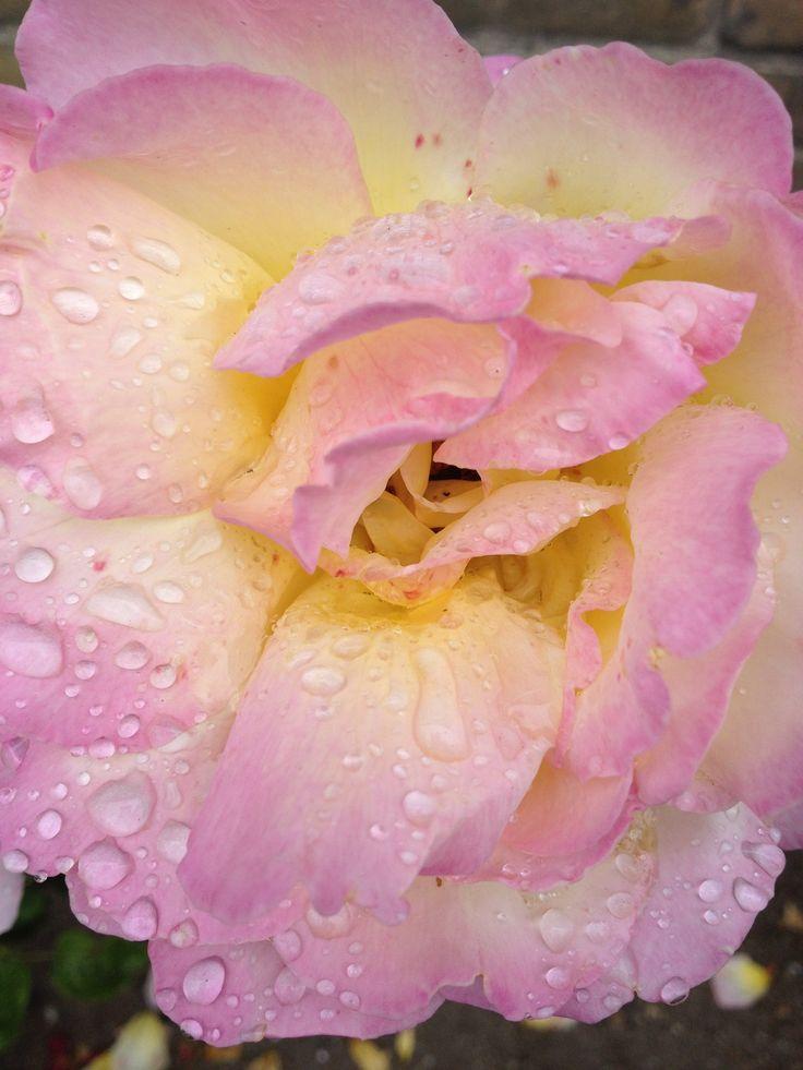 La vie en rose :-)