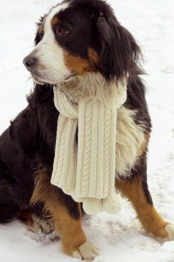 Une écharpe tricotée en maille irlandaise, même pour votre chien / A scarf knit in Irish stitch, even for your dog