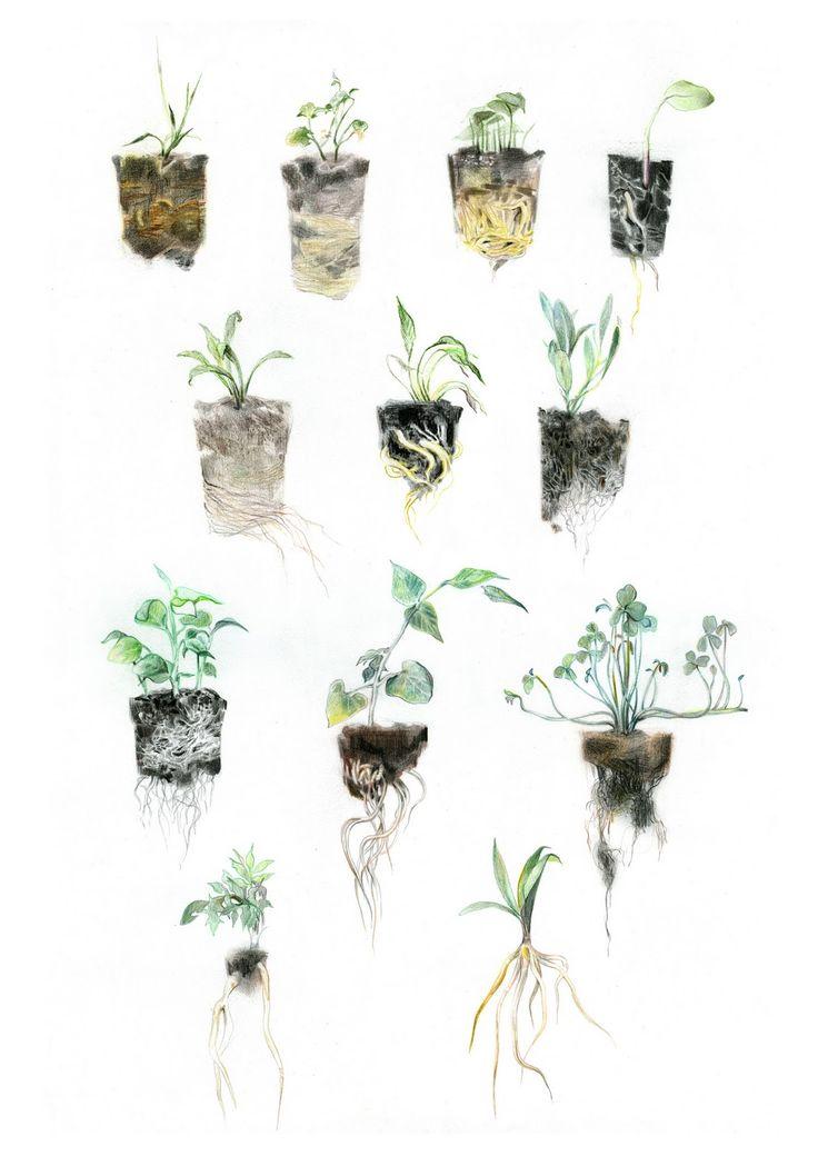 Marvelous illustration of plants by Junyi Wu.