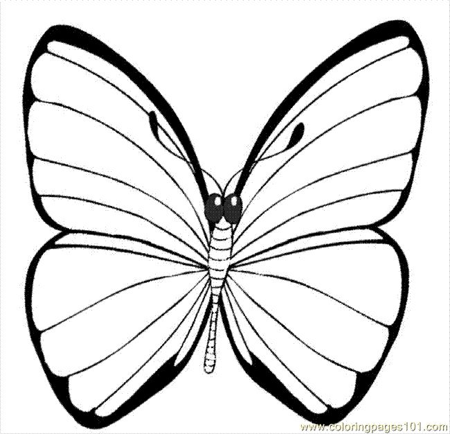 A Printable Picture Of A Butterfly