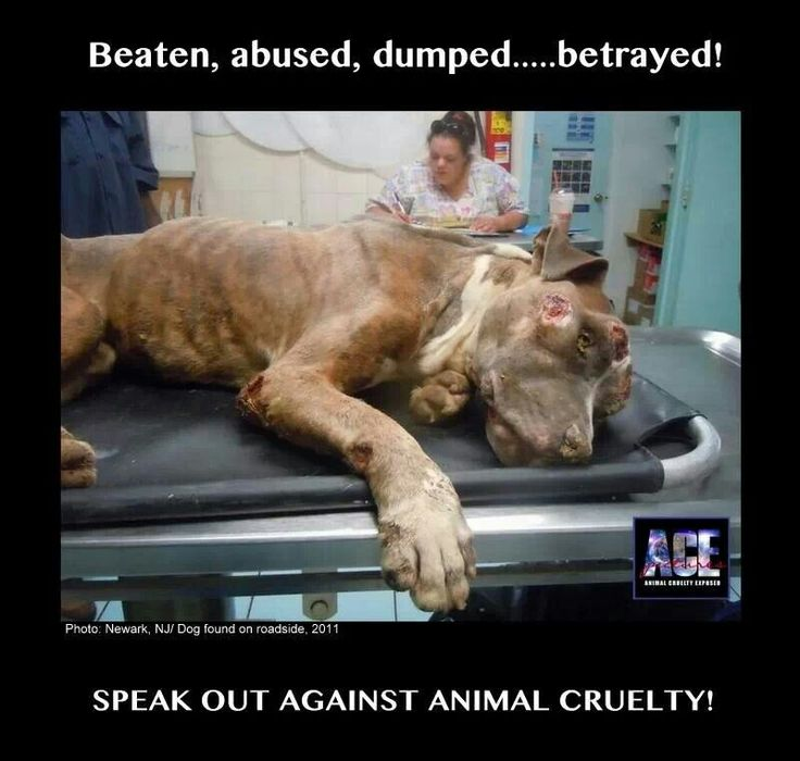 """animal abuse 5 One quick google news search of the term """"animal abuse"""" yields over 53,000 results animal abuse is a serious problem that many people are beginning to take notice of due to the horrific news ."""